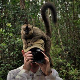 lemur med på arbejde
