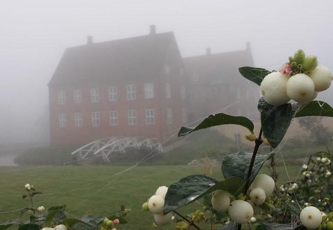 snebær og tåge