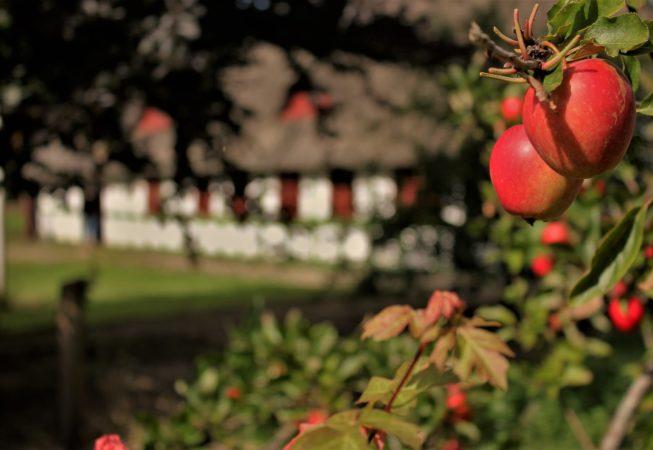 æbler i Mejlby