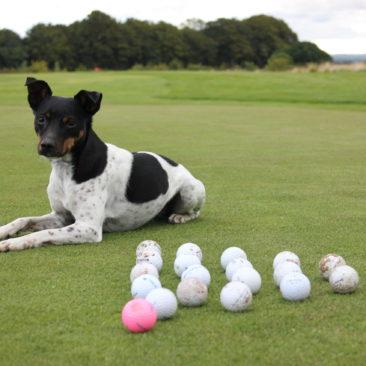 golfbolde fra Frida